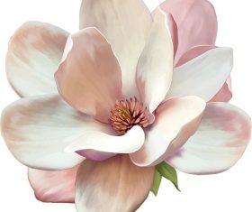 White Pink Camellia Flower Vector