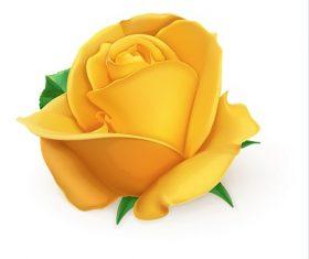 Yellow Orange Rose Vector