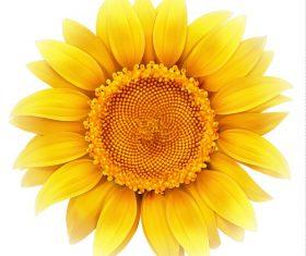 Yellow Sunflower Vector