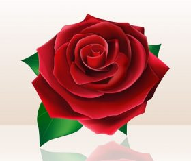 Big Rose with Shadow Background Vector