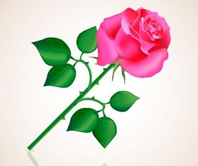 Pink Rose With Stem Vector