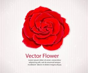 Red Rose Flower Icon Background Vector