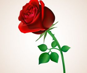 Red Rose with Stem and Thorns Background Vector