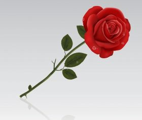 Red Rose With Water on Petals Background Vector