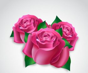 Three Beautiful Pink Flower Roses Vector