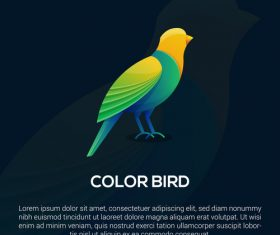 Color bird logo vector