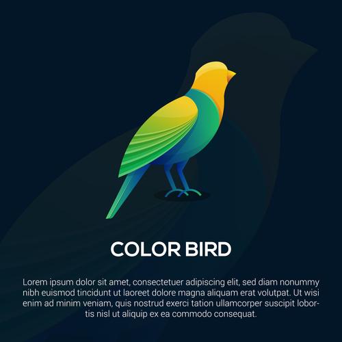Color bird logo vector