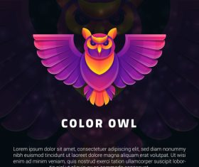 Color owl logo vector