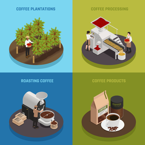 Coffee planting and roasting vector