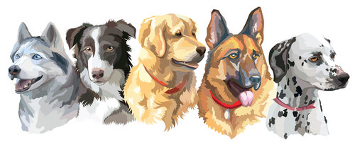 Different breed dog portrait vector