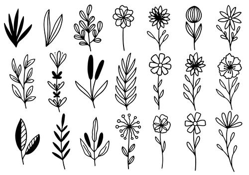 Herbs line vector