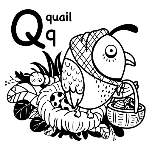 Animal literacy card quail illustrations vector