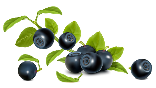 Blueberry and leaf vector
