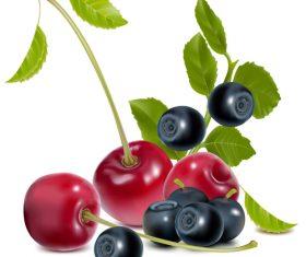 Cherries and Blueberries vector