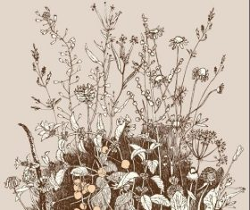Contour wild flowers background vector