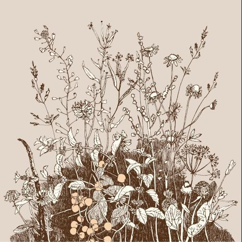 Contour wild flowers background vector