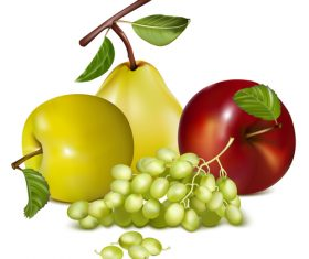 Different varieties of apples and grapes vector illustration
