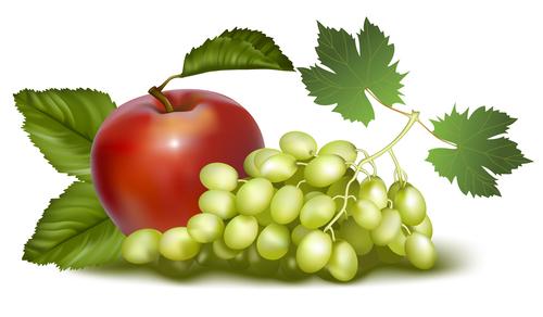 Drunk golden fragrance grape and apple vector
