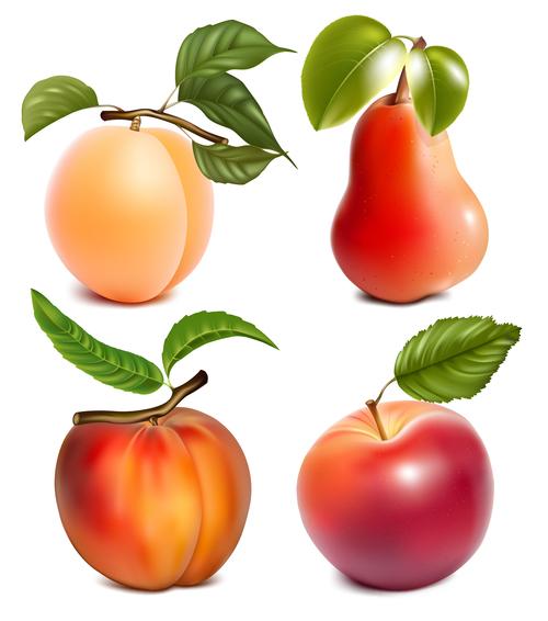 Four seasons fresh fruits vector illustration