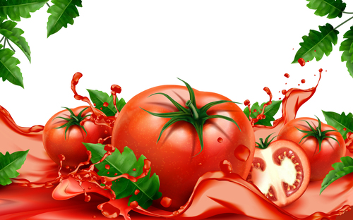 Fresh tomatoand and tomatoand juice vector