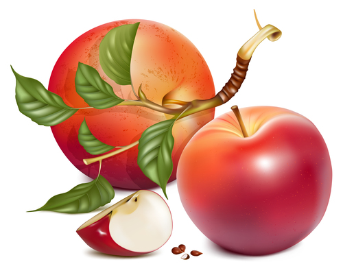 Freshly picked apple vector illustration