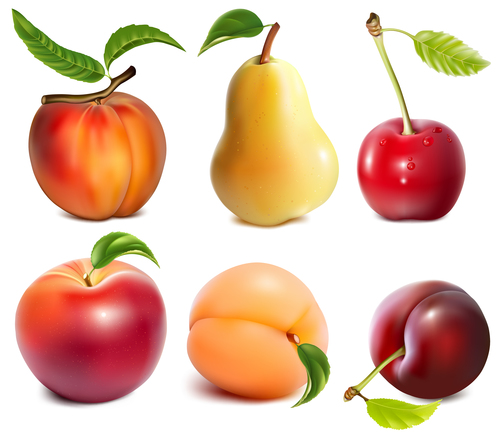 Freshly picked fruit vector