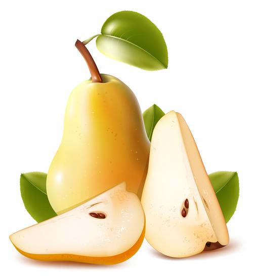 Pear fresh vector