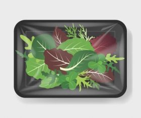 Various vegetable vacuum preservation plastic containers vector