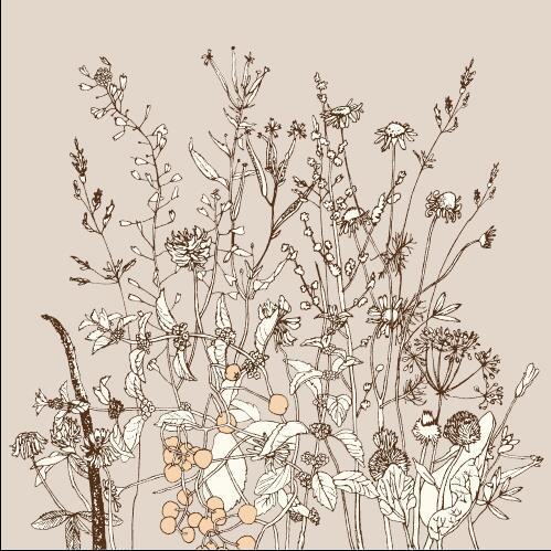 Wild flowers contour vector