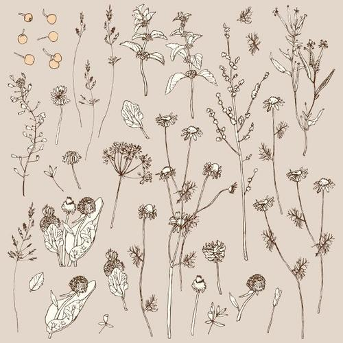 Wild plant pattern vector