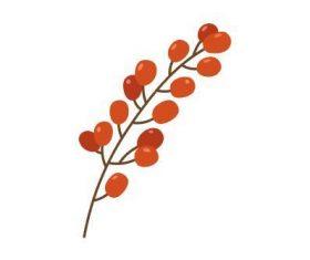 Autumn berries vector