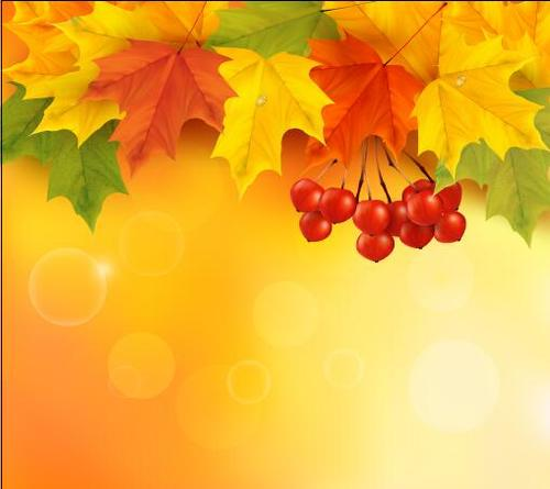 Autumn leaves and fruits vector