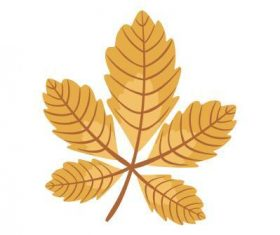 Chestnut leaf vector