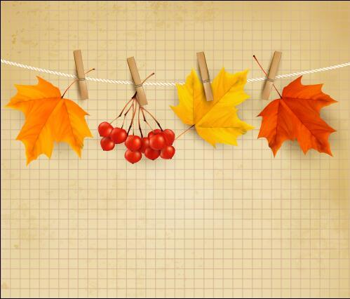 Collection autumn leaves vector