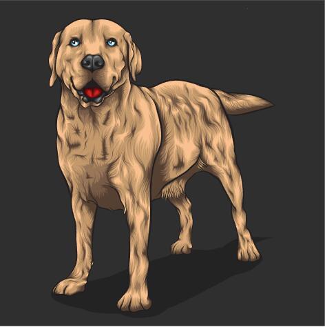 Dog hand drawn illustration vector