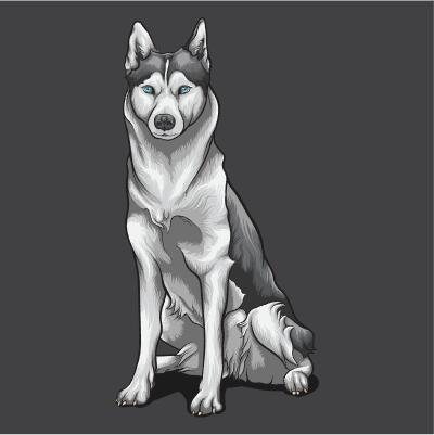Husky hand drawn illustration vector