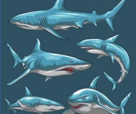 Shark hand drawn illustration vector