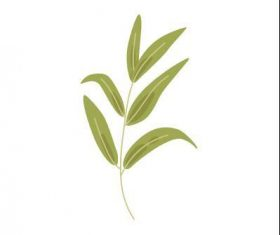Willow leaf vector