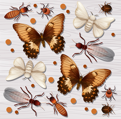 Butterfly insect specimen vector