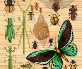 Insect specimen vector