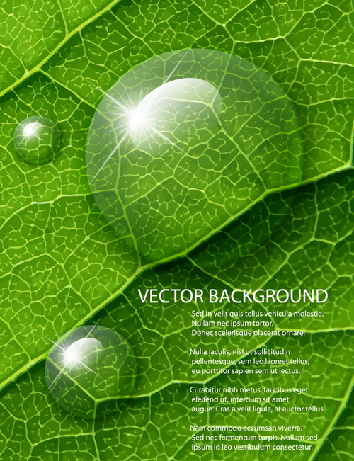 Leaf water drops background vector