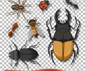 Longhorn beetle ant etc insect specimen vector