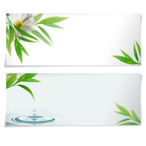 Plant banner vector