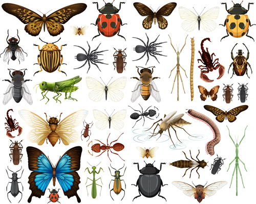 Various insect specimens vector