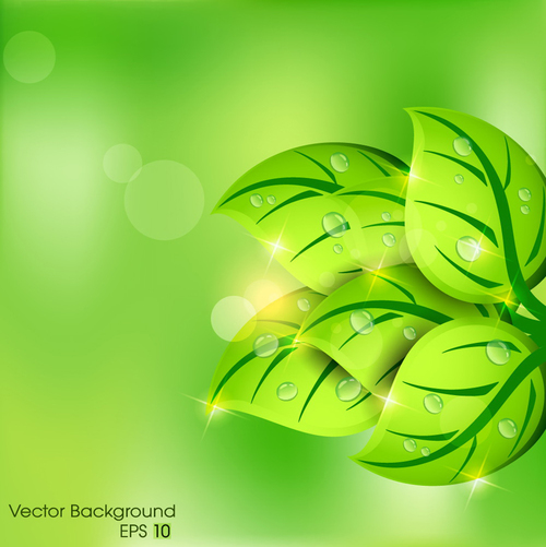 Water drops on green leaf background vector