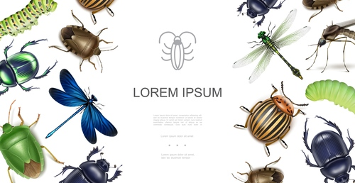 Insect realistic 3d illustration vector