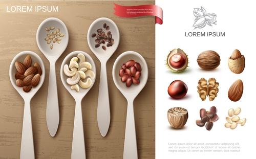 Nuts realistic 3d illustration vector