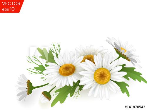 Beautiful flower background vector