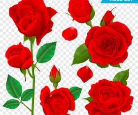 Beautiful red rose vector