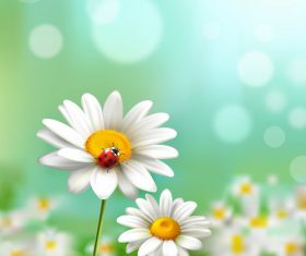 Chamomile flowers and ladybug in vector